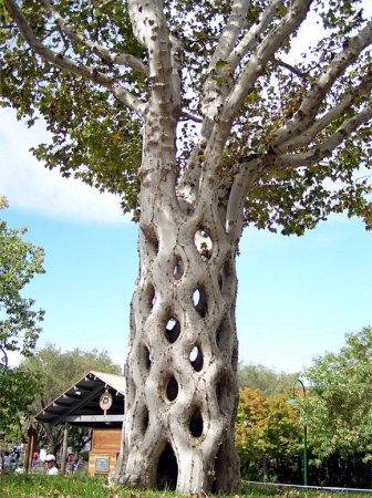 Как не лишить дерево природного узора