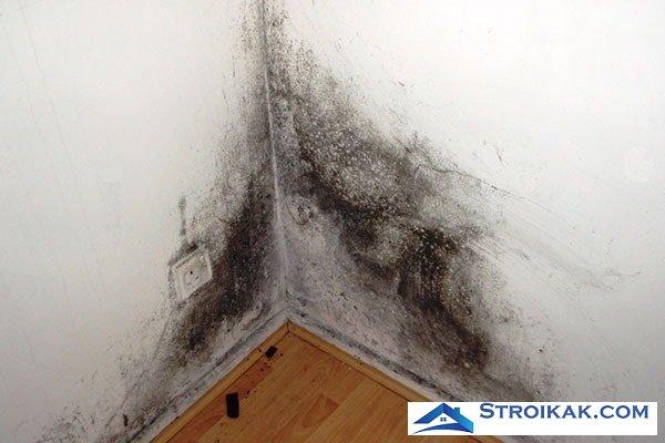 Причины появления грибка на стенах