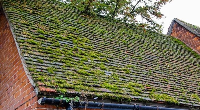Нарастание мха на крыше